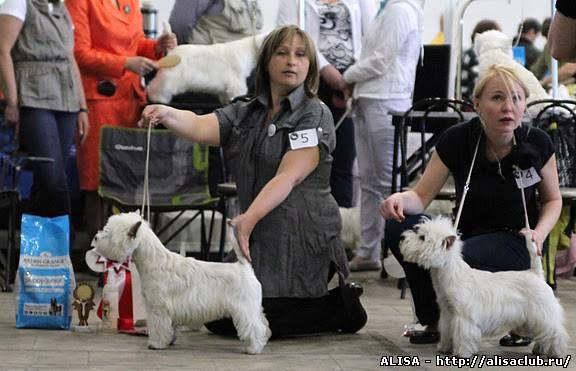 Полнорационный корм для взрослых собак породы вест-хайленд терьер